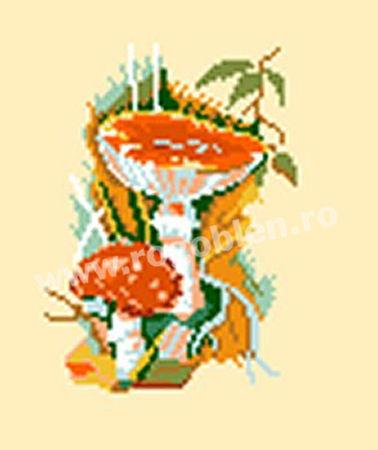 Funghi 8