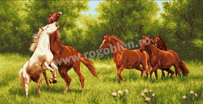 Poiana cailor