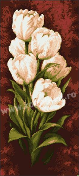 Tulipes nacré