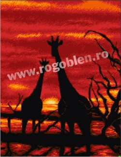 Giraffe al crepuscolo