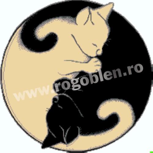 Gatti - Luce e ombra