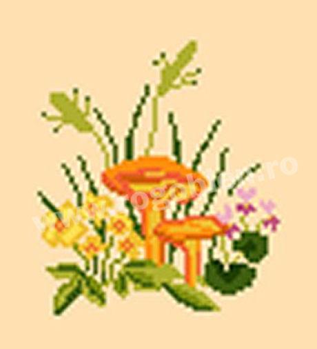 Mushrooms 6