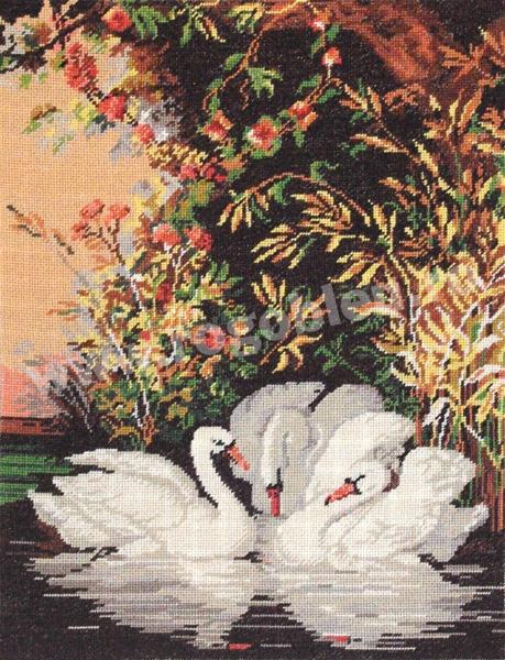 L`idylle des cygnes