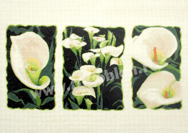 Calla Triptych