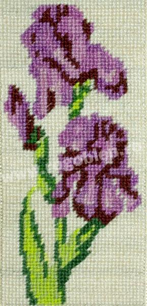 Iris lilas