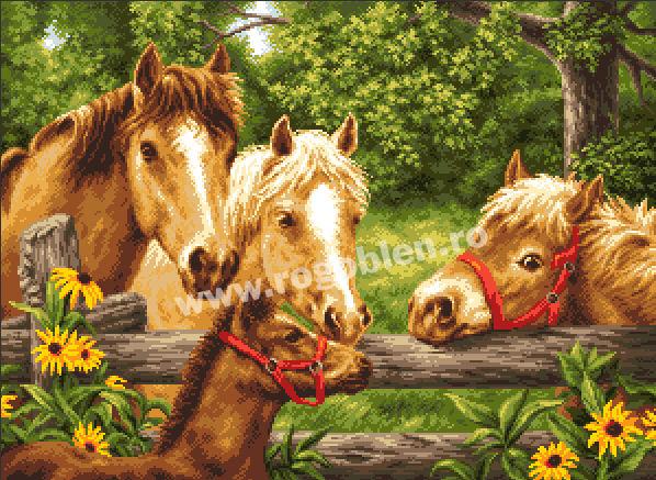 Horses ' Summer