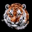 Goblen - Бенгальский тигр