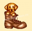 Goblen - Dog in Boot