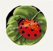 Goblen - Ladybug