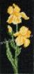 Goblen - Iris galben