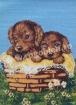 Goblen - Panier de chiots