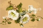 Goblen - Field Bindweed